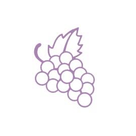 Vitis Vinifera Fruit Extract