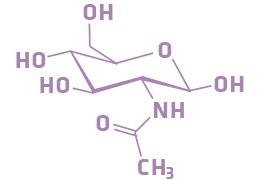 Acetyl Glucosamine